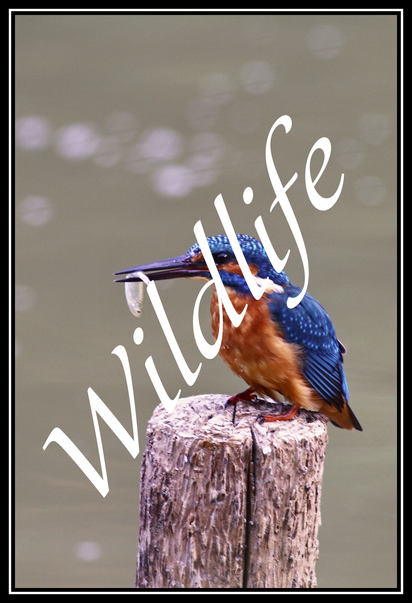 Wildlife-zvířata1